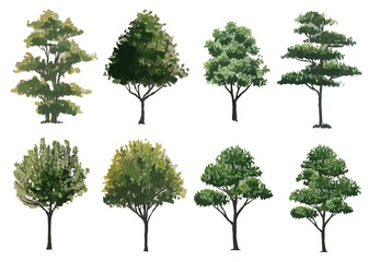 collection of  watercolor trees side view isolated for landscape plan