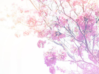 Wall Mural - Pink trumpet flowers with vintage filter effect