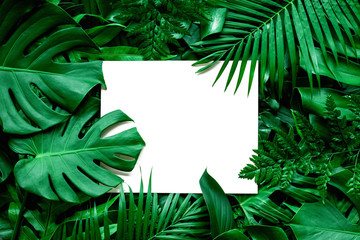 Fotobehang - tropical green leaves and palms  background with white paper card note, nature flat lay concept