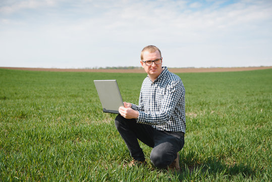 farmer standing in young wheat field examining crop and looking at laptop.