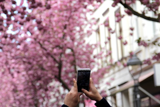 Frühling fürs Handy