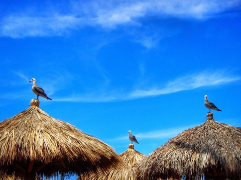 Low Angle View Of Seagulls Perched On Top Of Huts