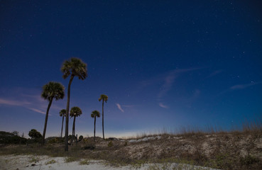 Palmetto trees on empty beach at night with stars.
