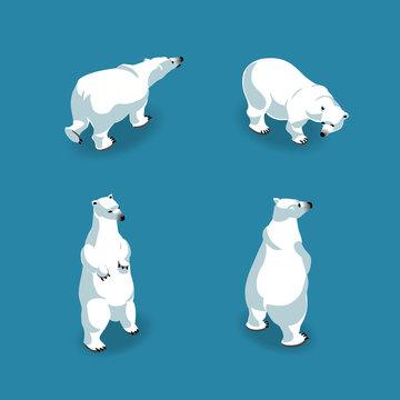 Polar bears in 4 poses in isometry. Vector illustration