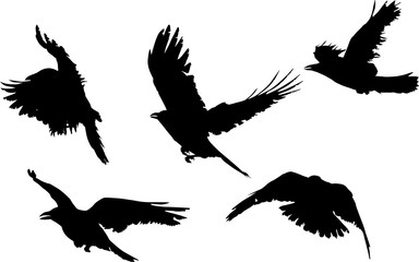 group of five black crow silhouettes isolated on white Fototapete
