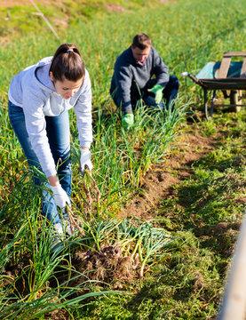 Female farmer harvesting green garlic