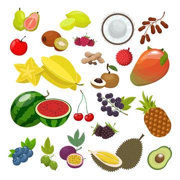 Exotic fruit set. Ripe watermelon avocado carambola mango passion fruit pineapple durian guava coconut tamarind rambutan longan blueberry gooseberry blackberry. Organic fruitorian vector graphic.