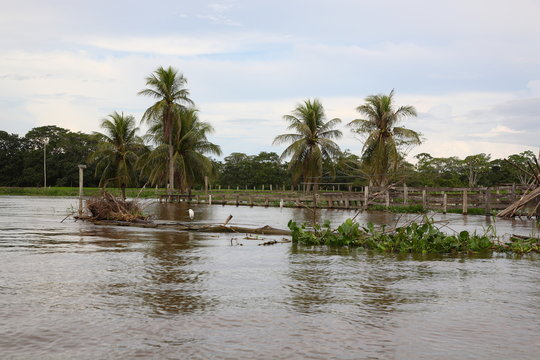 Trees in a flooded area in the Amazon rainforest in Brazil