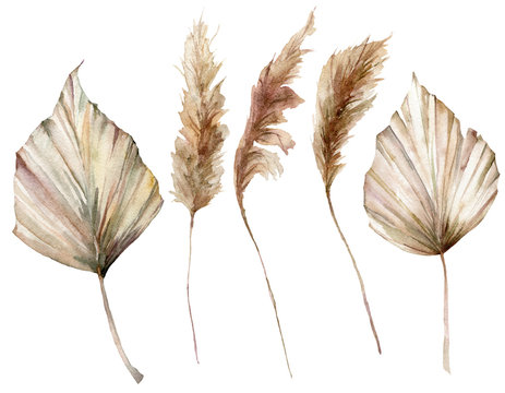 Watercolor tropical set with dry palm leaves and pampas grass. Hand painted exotic leaves isolated on white background. Floral illustration for design, print, fabric or background.