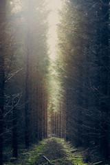 Keuken foto achterwand Weg in bos A foggy alley in mysterious forest