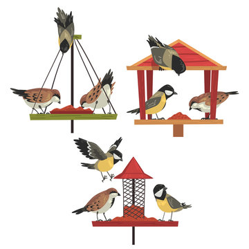 Winter Bird Feeder with Chickadees and Titmouses, Northern Birds Feeding by Seeds Vector Illustration