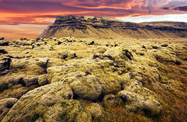 Fotomurales - Typical Icelandic nature landscape. rocky field of  lava with moss in Iceland and old Volcanic mount with colorful sky during sunset. Fantastic Iceland nature