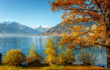 Fotomurales - Awesome sunny landscape in the forest. Wonderful Autumn scenery. Picturesque view of nature. Amazing natural Background. Sun rays through colorful trees. Incredible view on alpine forest lakeside