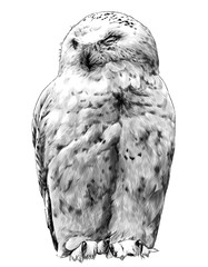Canvas Prints Owls cartoon polar owl sitting with closed eyes, sketch vector graphics monochrome illustration on a white background