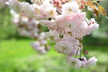 Spring in New York City, USA