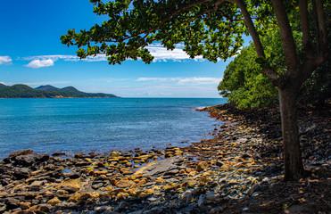 Fotorolgordijn Chocoladebruin vegetação verde da linda praia tropical, a praia da Ilhota, em Itapema, SC, Brasil