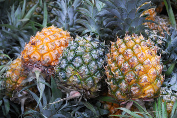 Wall Mural - close up on pineapple in pile