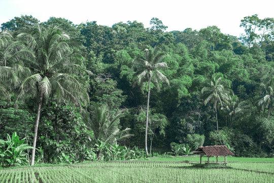 nature landscape at west java indonesia