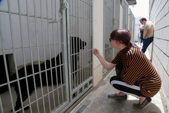 A girl looks at a dog at Riyadh's animal shelter, dedicated to caring for animals amid fear that cats and dogs might contract or transmit the coronavirus disease (COVID-19), Riyadh