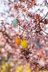 Easter eggs in a flowering tree