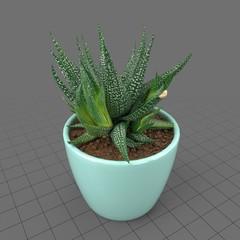 Succulent in planter 2