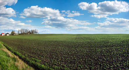 Wall Mural - Fresh green plants soy on the field in spring, village panorama, selective focus