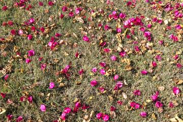 florada da primavera