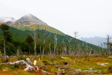 Tierra Del Fuego National Park - Argentina Fotomurales