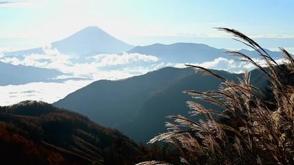 Wall Mural - ススキと富士山