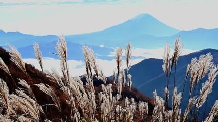 Wall Mural - 揺れるススキと富士山
