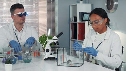 Black female research scientist making experiment with hamster in modern chemistry laboratory using pipette to drop some liquid to the container.