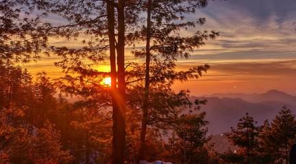 Foto auf Gartenposter Violett rot Silhouette Trees On Landscape Against Sky During Sunset