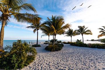 vacances de rêves avec 3 pélicans volant au dessus de la plage de sable blanc