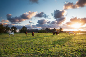 Wall Mural - horses on pasture in sunset light