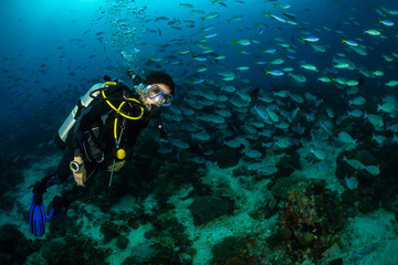 woman diving with a school of surgeon fish and fusilier