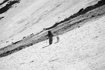 Wall Mural - Hiker with dog on snowy glacier and avalanche trace at mountains
