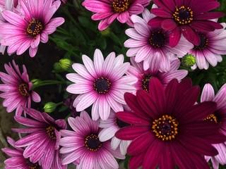 Parterre de magnifiques fleurs colorées.