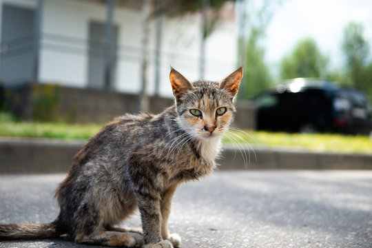 Homeless thin cat sitting on the pavement road