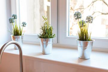 Fototapeta Rośliny doniczkowe, kwiaty przy oknie. obraz