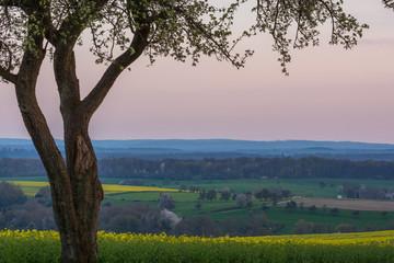 Foto auf AluDibond Dunkelgrau Tree On Countryside Landscape
