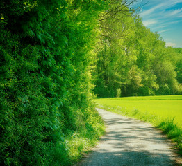 Rural Bavaria landscape in springtime: dirt road flanking a wood, ideal for a bike ride or hiking under a blue sky with white clouds
