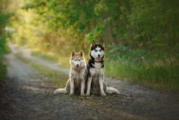 my Photos Beautiful dogs and nature