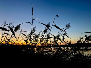 trawa o zachodzie
