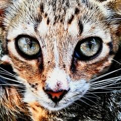 Fotobehang Tijger Close-up Portrait Of Cat