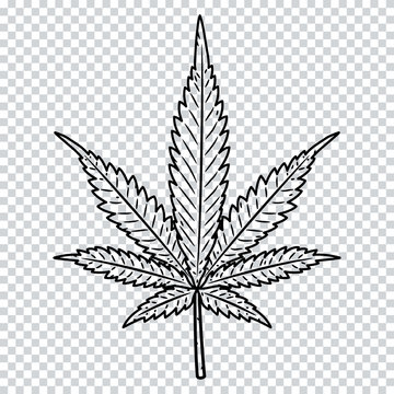 Cannabis leaf isolated on a transparent background. Marijuana leaf.