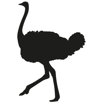 Silhouette of ostrich on white background