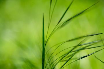 Gras, Closeup, Frühling