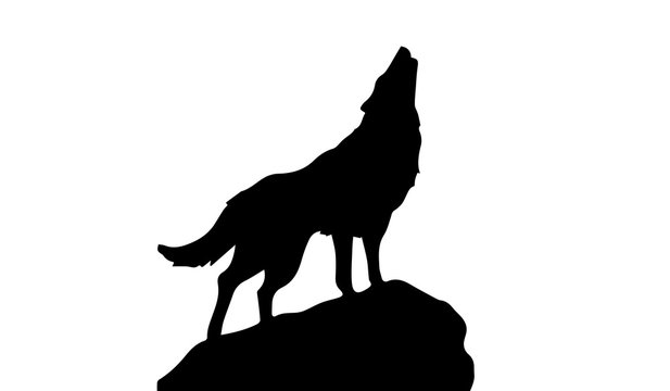 Silhouette of wolf on white background