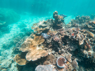 Coral underwater Great Barrier Reef. Colorful coral fish  ecosystems in beautiful ocean. Clear blue turquoise sea. Coral reef, underwater scene. Coral bleaching, endangered, marine life. Australia
