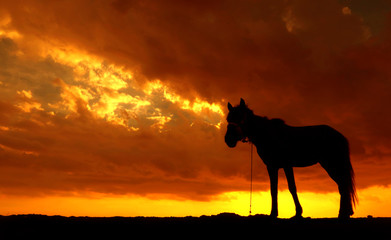 Silhouette Of Horse Standing On Field Against Dramatic Sky - fototapety na wymiar
